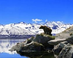Отчет по выбросам в окружающую среду
