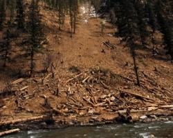 Когда рубить лес для дома?