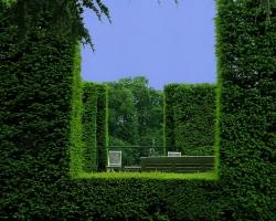 Декоративные изгороди