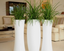 Техника размножения декоративных растений. Продолжение