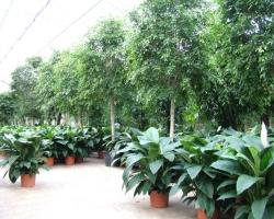 Почвенные смеси для декоративных растений