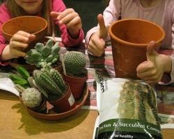 Сажаем миниатюрный садик из кактусов вместе с детьми