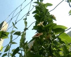 Опоры для лиан на садовом участке