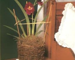 Орхидея в корзинке