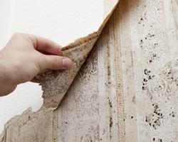 Как избавиться от плесени в доме?