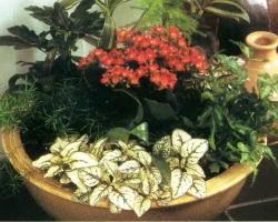 Декоративная растительная композиция «Благодатная смесь»