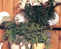 Декоративная растительная композиция «Красота в единении»