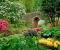 Сад с декоративнолистными растениями