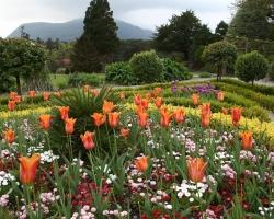 Подбираем растения для сада