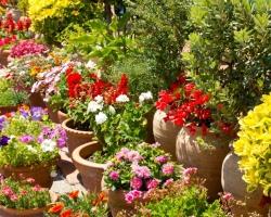 Малые сады в составе большого сада