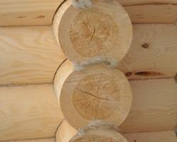 Из какой древесины построить дом?
