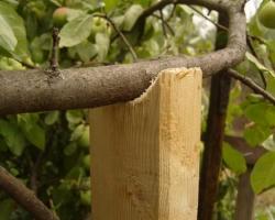 Подпорки под ветки плодовых растений