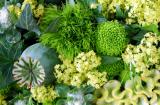 Зеленый цвет в саду
