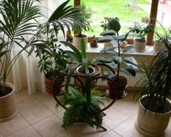 Зимний сад в квартире