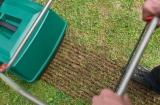 Сеяные газоны и устройство газона