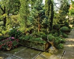 Хвойные деревья в ландшафтном дизайне и озеленении