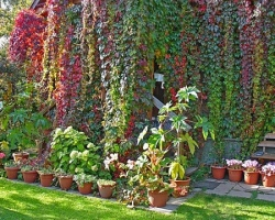 Вертикальное озеленение: новый стиль вашего участка