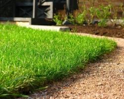 Газон в озеленении