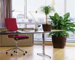 Внутреннее озеленение офисов