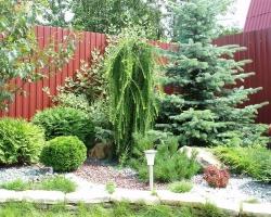 Весенний уход за декоративными растениями