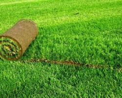 Рулонный газон или посевной?