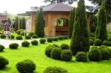 Ландшафт вокруг загородного дома: растительность