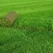 Как разбить газон на даче?