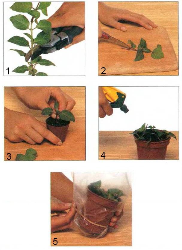 Техника размножения декоративных растений