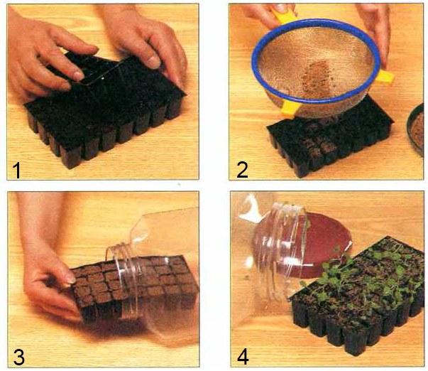 Выращивание растении в домашних условиях