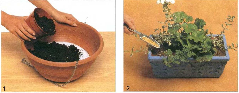Питание горшечных растений