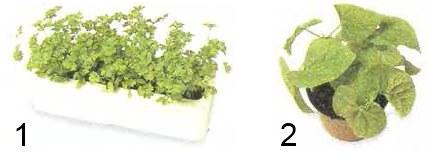 Питательный декор: фасоль и петрушка в корзине