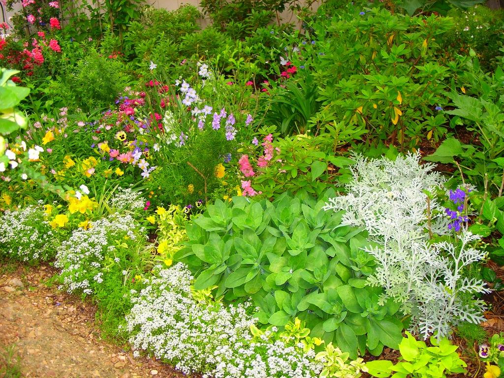 Выбор растений для палисадника