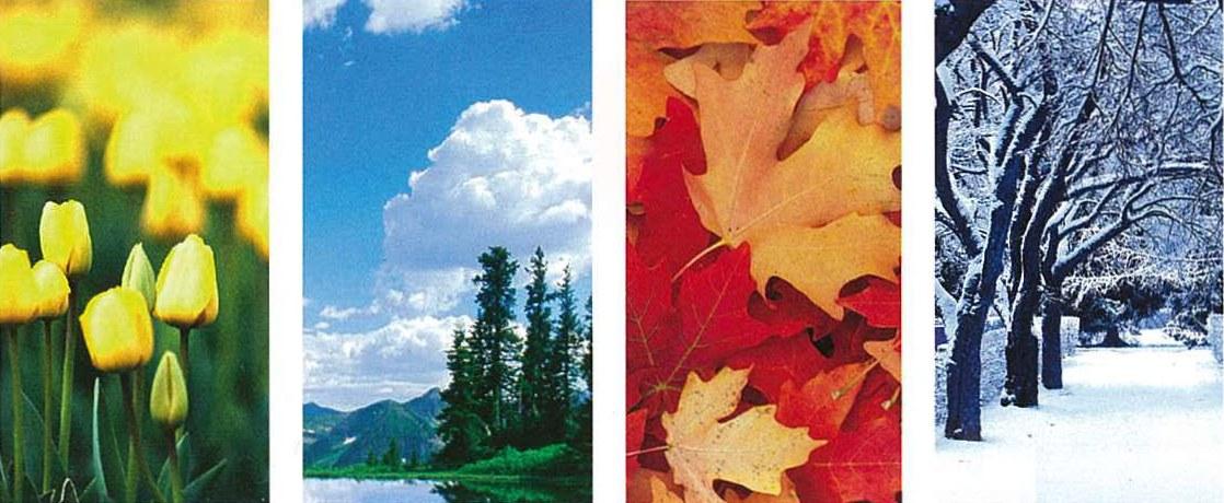 Цветовая теория «Времена года» в интерьере