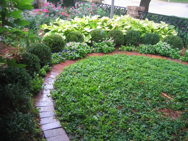 Современный вариант регулярного сада. Продолжение 1