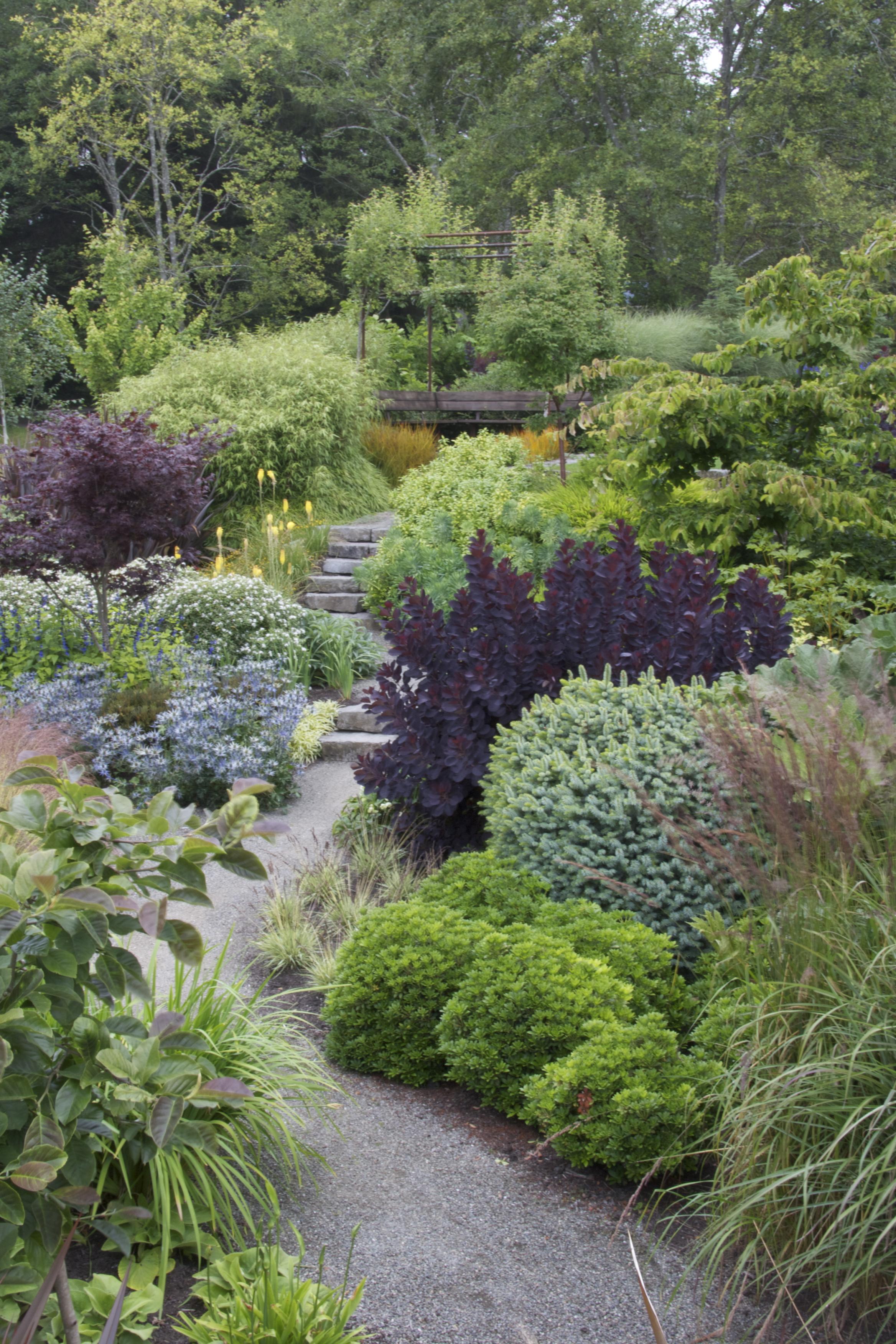 Маленький неприхотливый сад в теплом климате. Продолжение 2