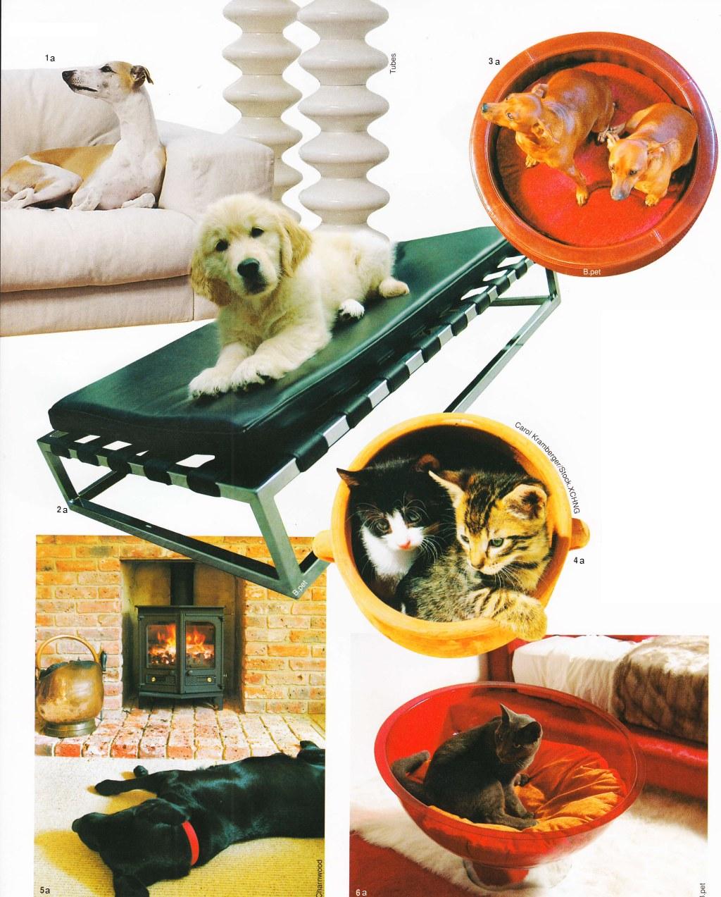 Модная мебель для животных