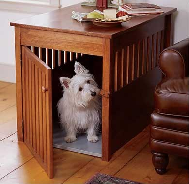 Собака для однокомнатной квартиры