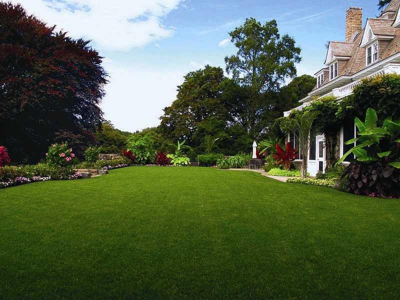 DLF Trifolium: газонная трава для любого участка