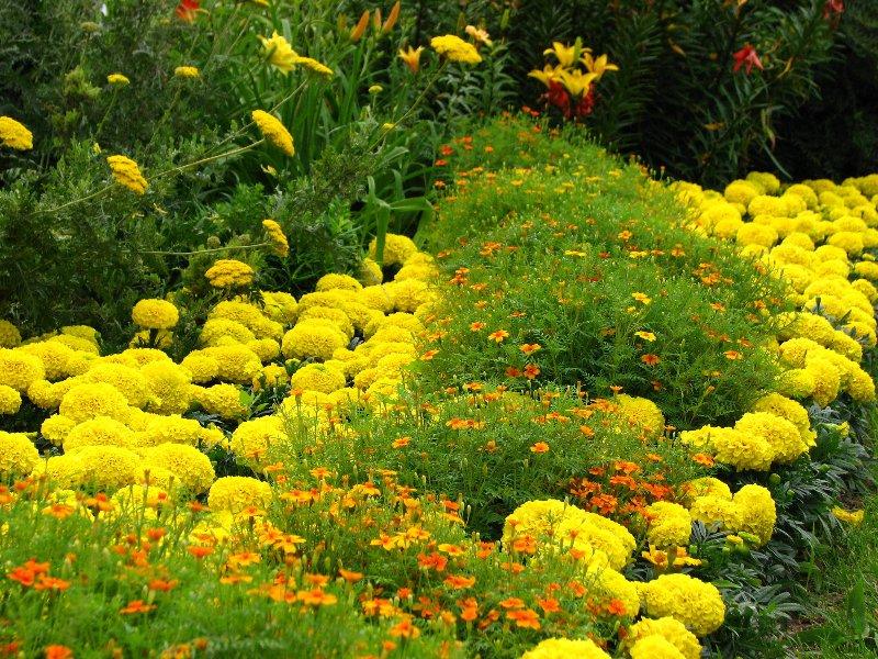 Желтый цвет в архитектуре и дизайне сада