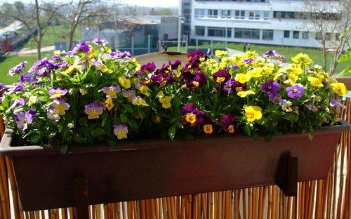 Ваш красивый теневой балкон