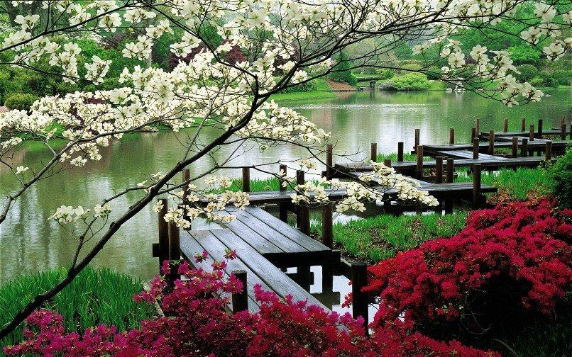 Растения японского сада