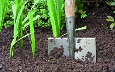 Улучшаем почву на дачном участке