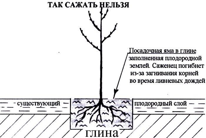 Ландшафтный дизайн: посадка саженцев